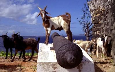 goat_madagascar_fort_dauphin_ken_walker.